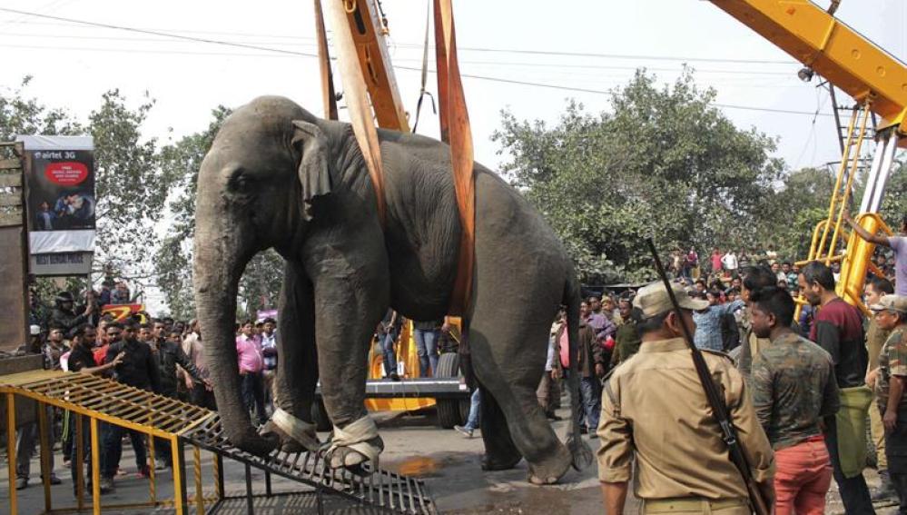 El elefante, en el proceso de traslado