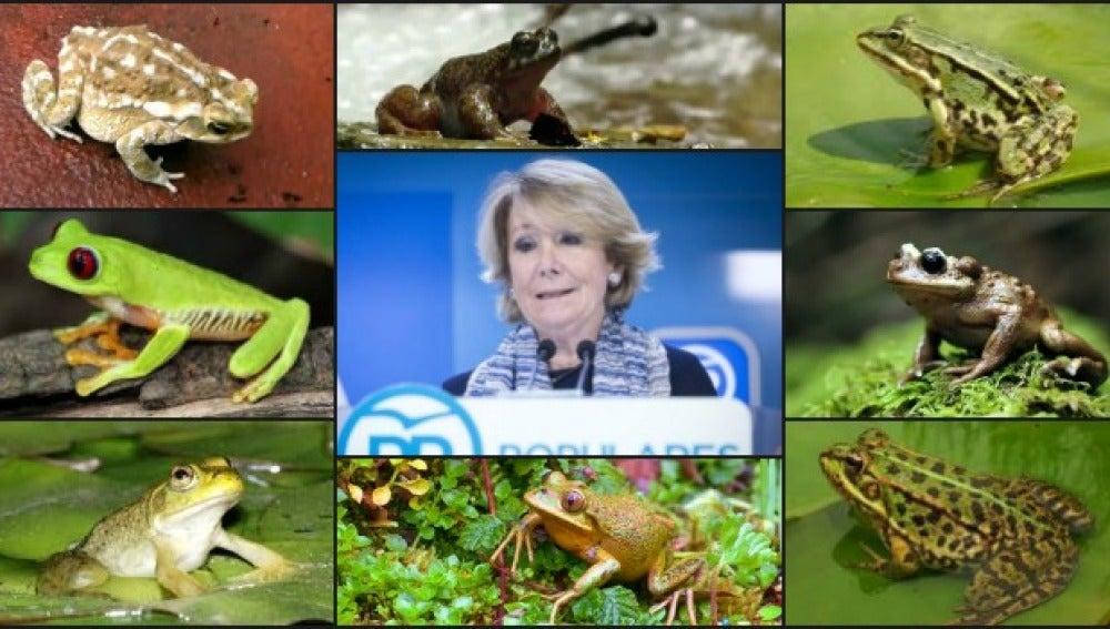Esperanza Aguire y las ranas