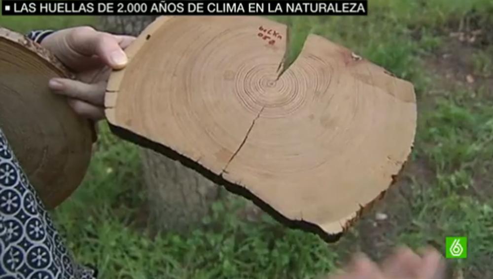 Imagen del anillo de un árbol