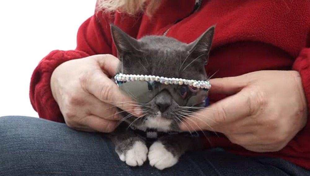 Bagel con gafas