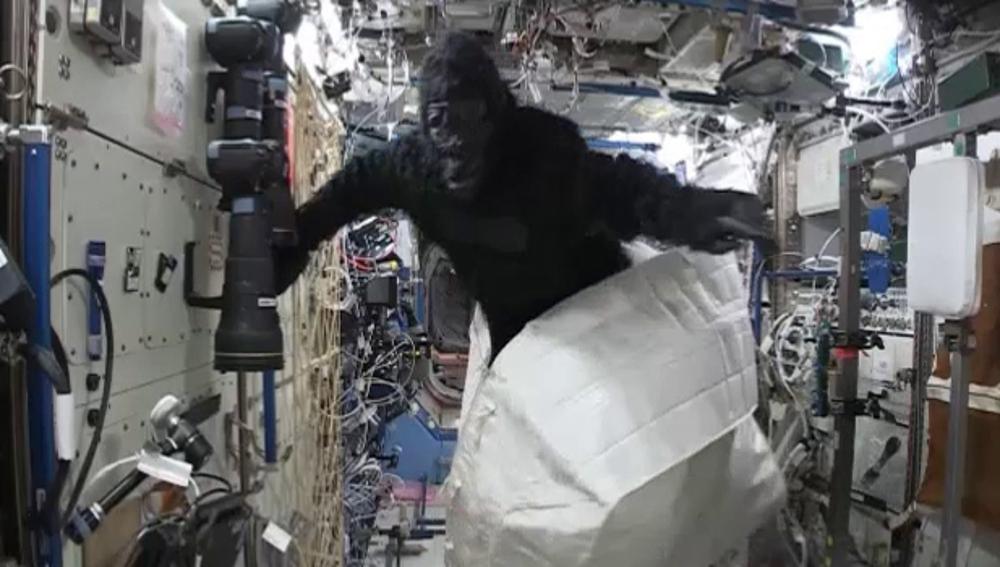 Gorila saliendo de la cajaj en la Estación Espacial Internacional