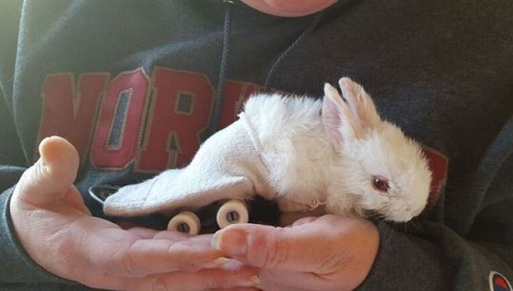 Imagen del conejo paralítico