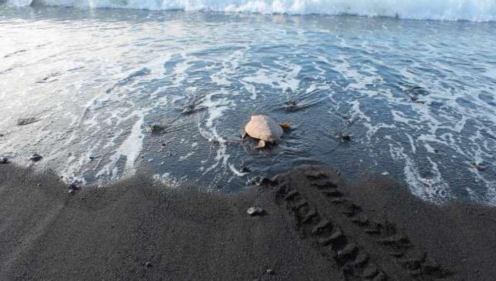 Liberan una tortuga boba que había quedado enmallada en agosto de 2015