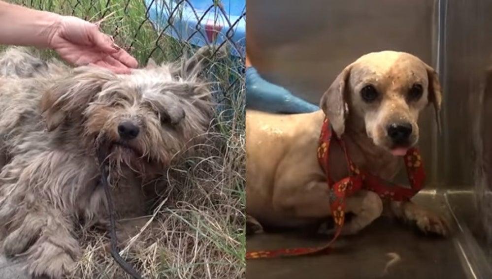 Imagen de Benji antes y después