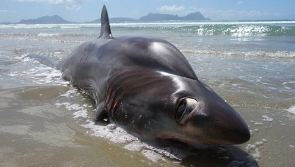 Imagen del tiburón muerto en una playa de Nueva Zelanda