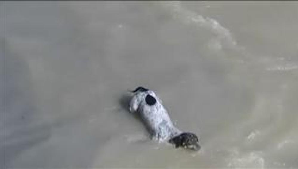 La dura aventura con final feliz de un perro arrastrado por la corriente de un río en Perú