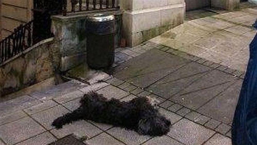 Blas, el perro que murió pateado en la calle en Santander