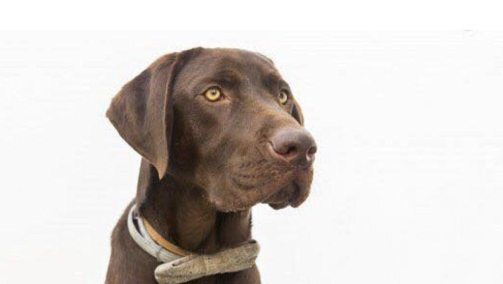 Nanook, el perro labrador que ha avisado del suceso