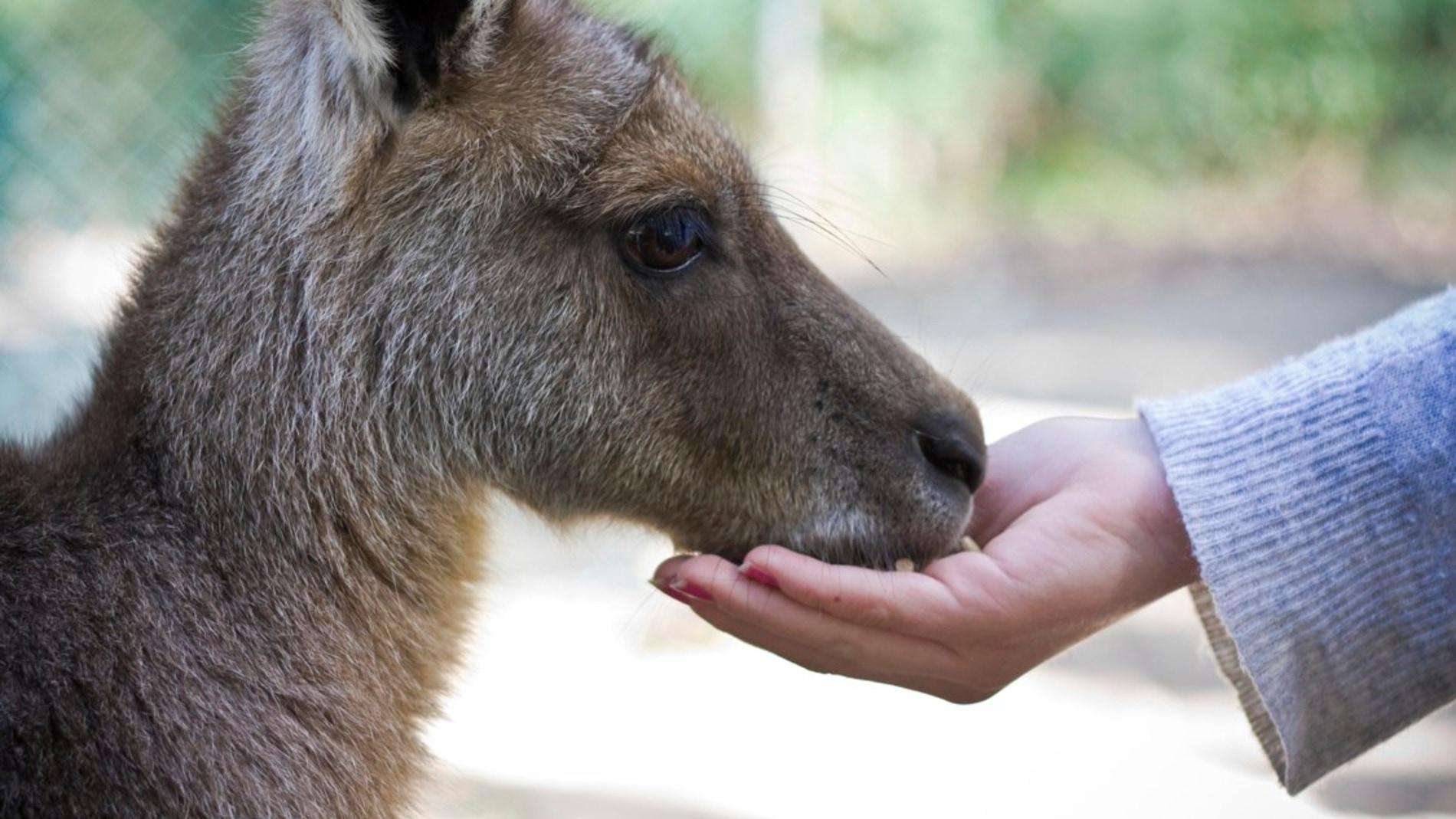 ¿Por qué algunos animales toleran más el contacto humano que otros?
