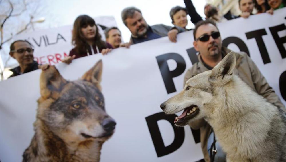 Manifestación en Madrid en defensa del lobo ibérico