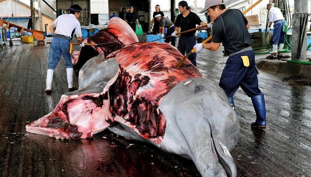 Momento en que retiran la piel a una ballena