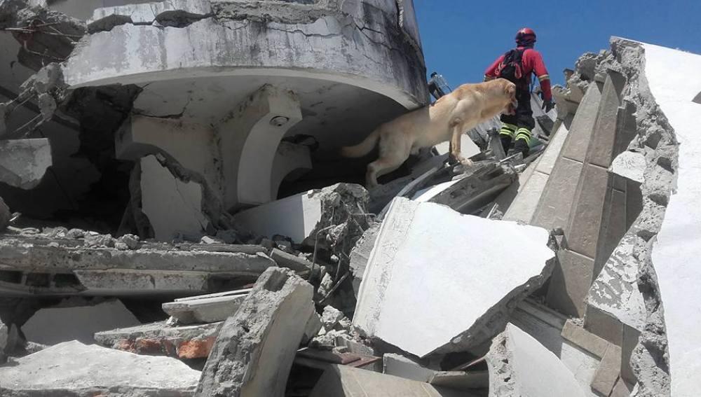 Dayko, el perro del terremoto de Ecuador