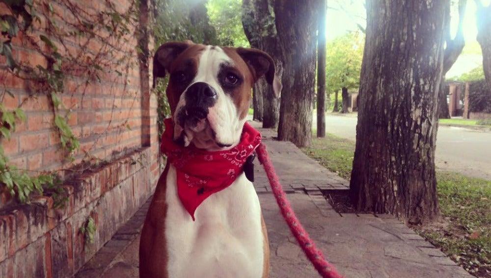 Óscar, el boxer que quiere volar a México