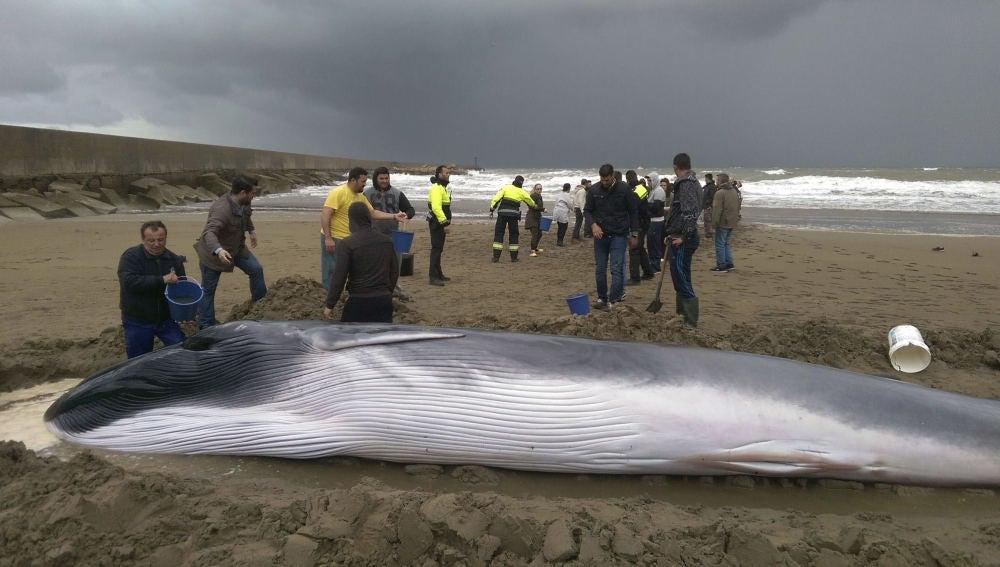 Ballena varada en una playa de Ayamonte
