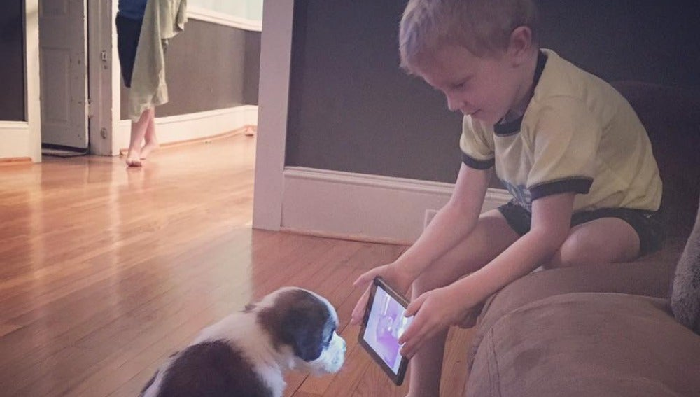Lincoln 'adiestra' a su perro con tutoriales de YouTube