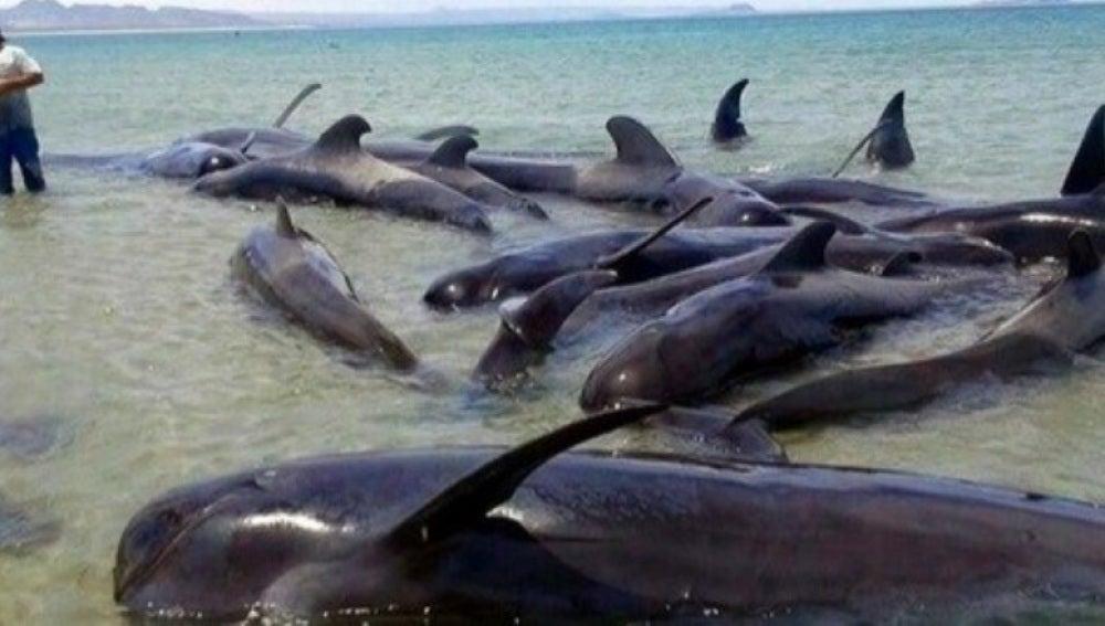 Ballenas varadas en México