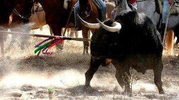 Imagen de archivo del Toro de la Vega