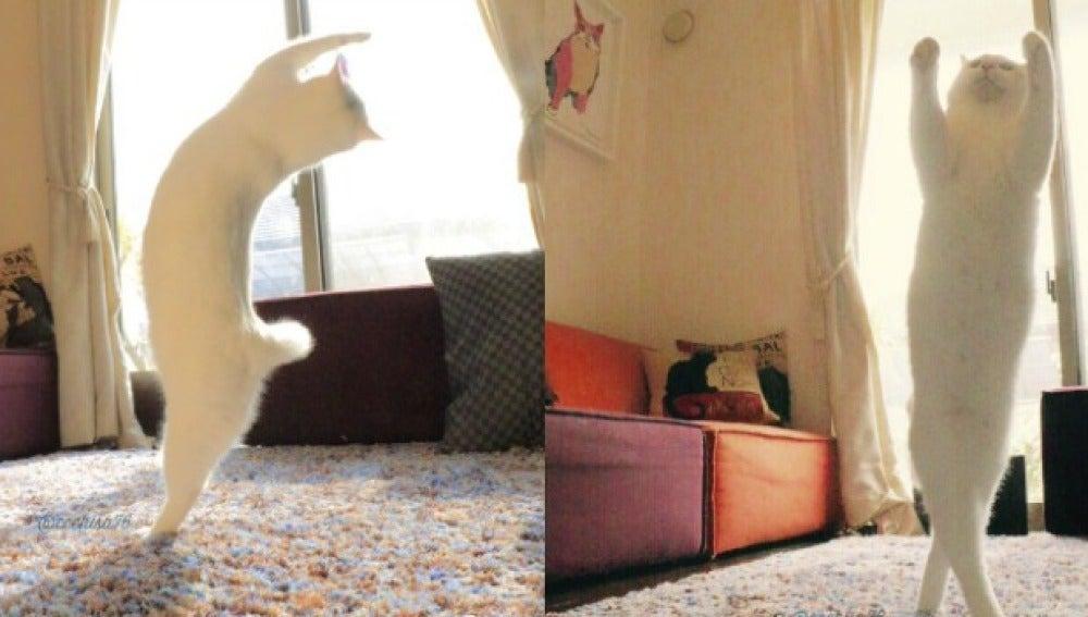 Imagen del gato haciendo ballet
