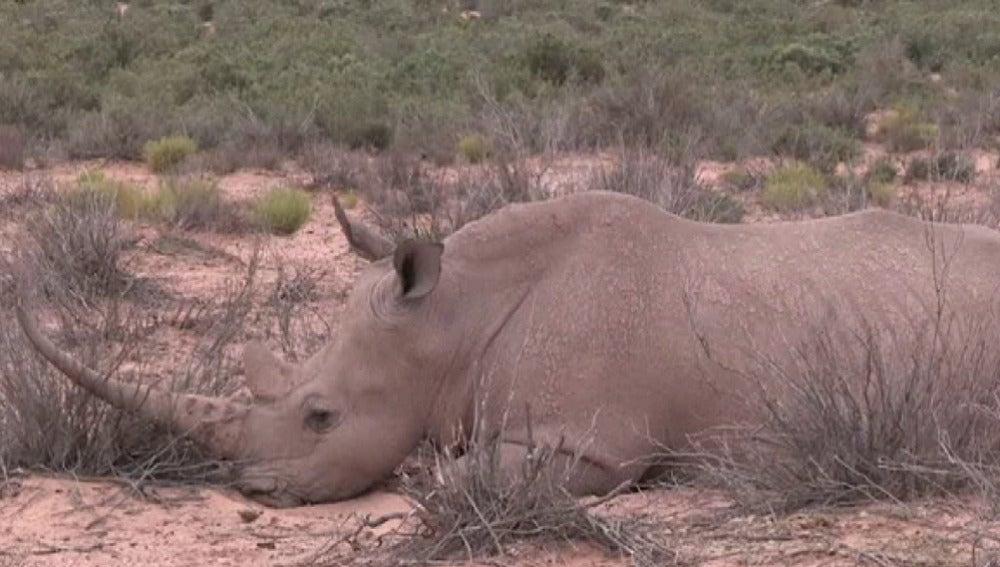 Imagen de un rinoceronte