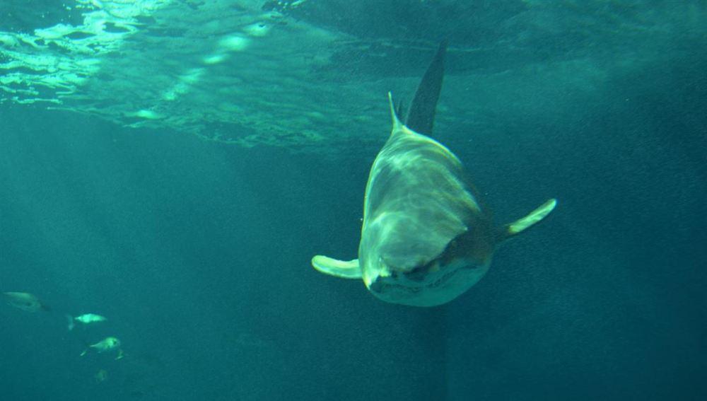 Un tiburón en el acuario de Sevilla