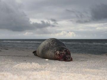 Una foca en la playa