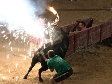 Un joven tirando del rabo de un toro