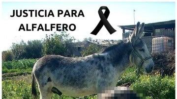 Imagen del burro 'Alfalfero', maltratado hasta la muerte