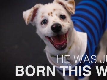 Walter, el perro que entiende lenguaje de signos