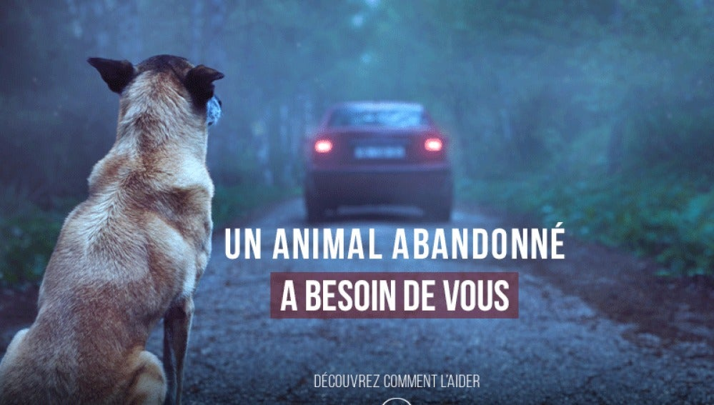 Campaña viral con el objetivo de prevenir el abandono animal