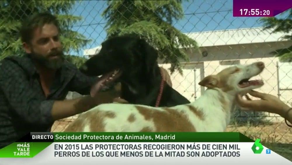 Frame 32.454436 de: PERROS PROTECTORA