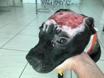 Kiara, la perra maltratada a la que la Guardia Civil ha rescatado