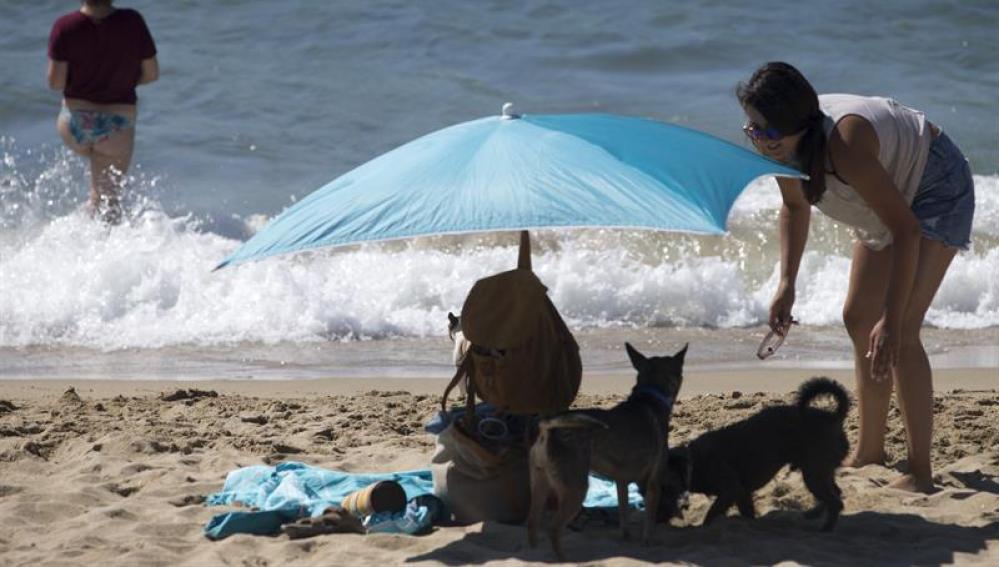 Perros en la playa de Barcelona.
