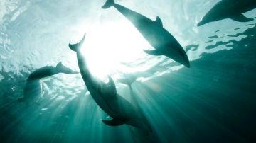 Imagen de archivo de varios delfines