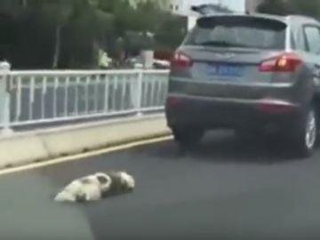 Un hombre arrastra a su perro hasta la muerte en China