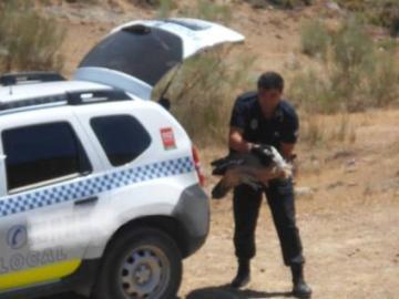 La Policía de Jaen rescatando al buitre