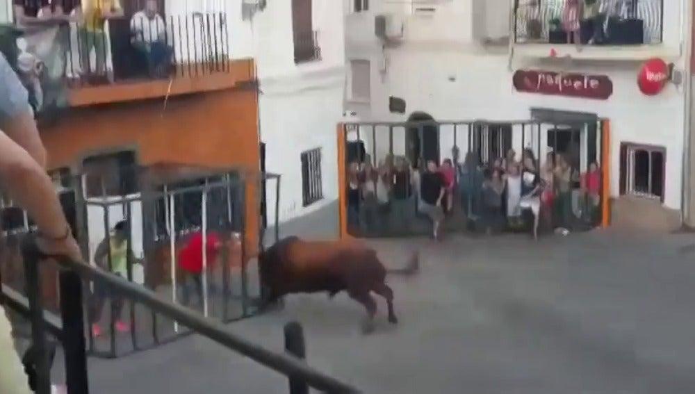 Frame 14.458497 de: Un toro rompe la jaula de seguridad y embiste brutalmente a un hombre en Onteniente, en Valencia