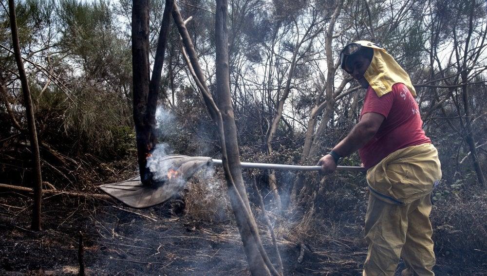 Agente foresta en las labores de extinción