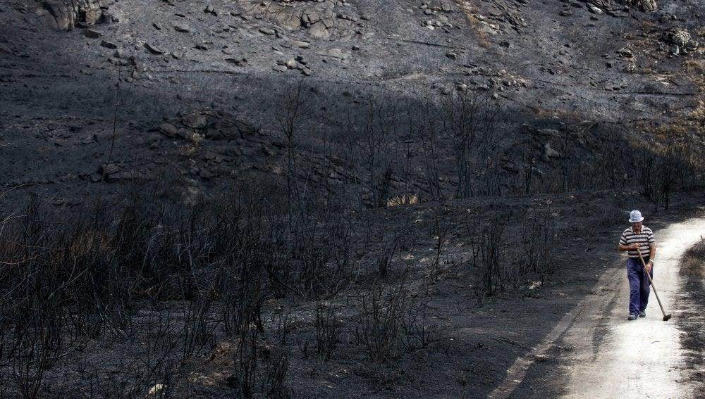 Un hombre camina por terrenos arrasados en los incendios que han asolado Galicia