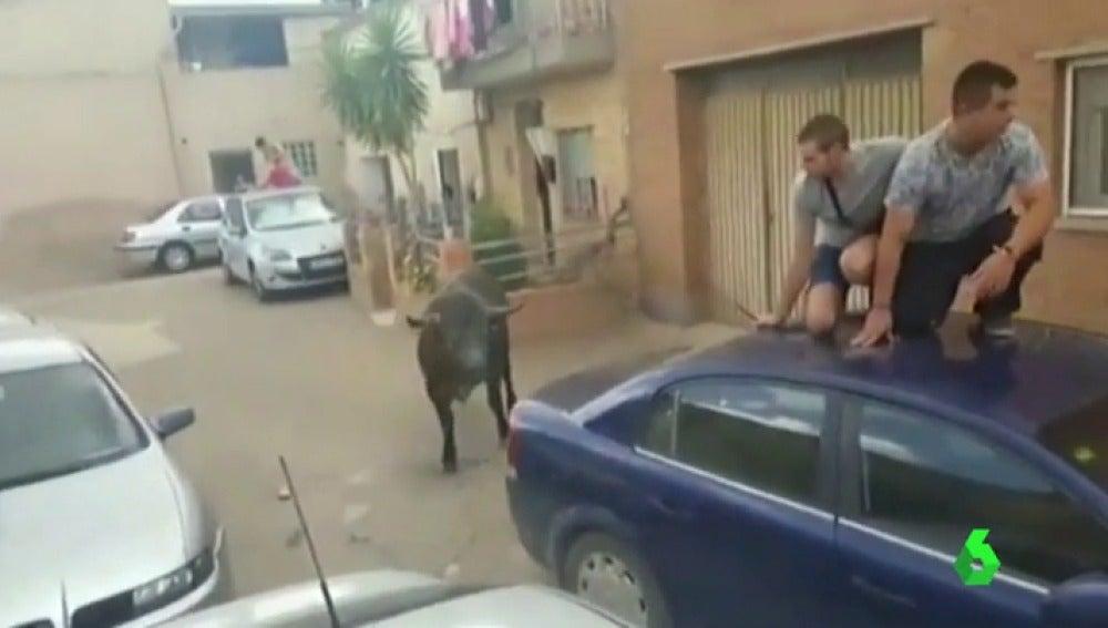 Frame 0.947907 de: El Gobierno de Aragón investiga el encierro en el que se escapó un novillo que hirió a una menor de siete años