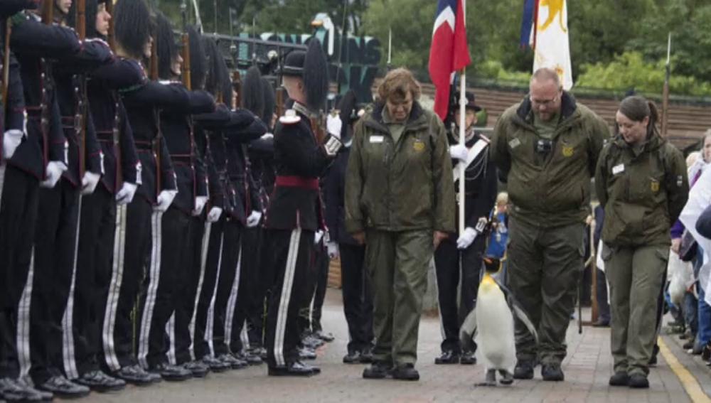 Frame 24.914268 de: Nils Olav, el pingüino teniente que supervisa a la Guardia Real noruega