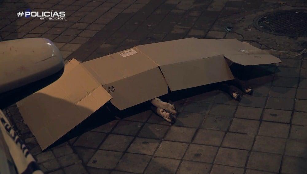 El perro fue abatido por un policía tras atacar a varias personas