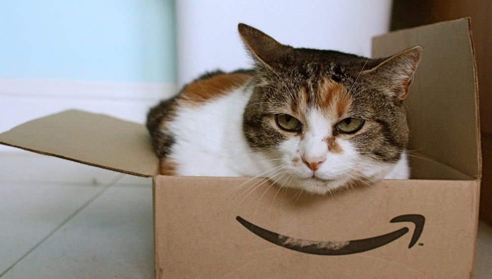 Un gato en una caja de Amazon