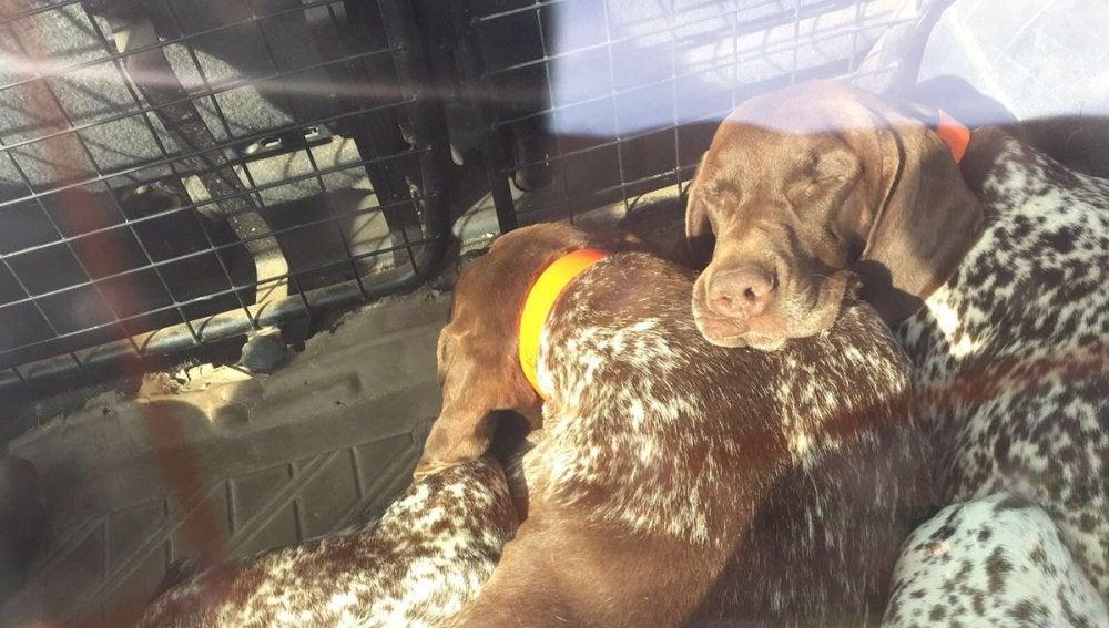 Imagen de los tres perros atrapados dentro de un coche