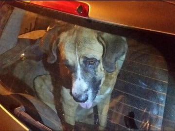 Uno de los perros encontrados la operación policial