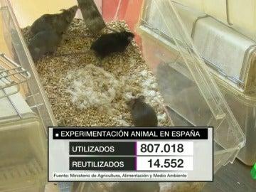 Número de animales empleados cada año en la experimentación en España