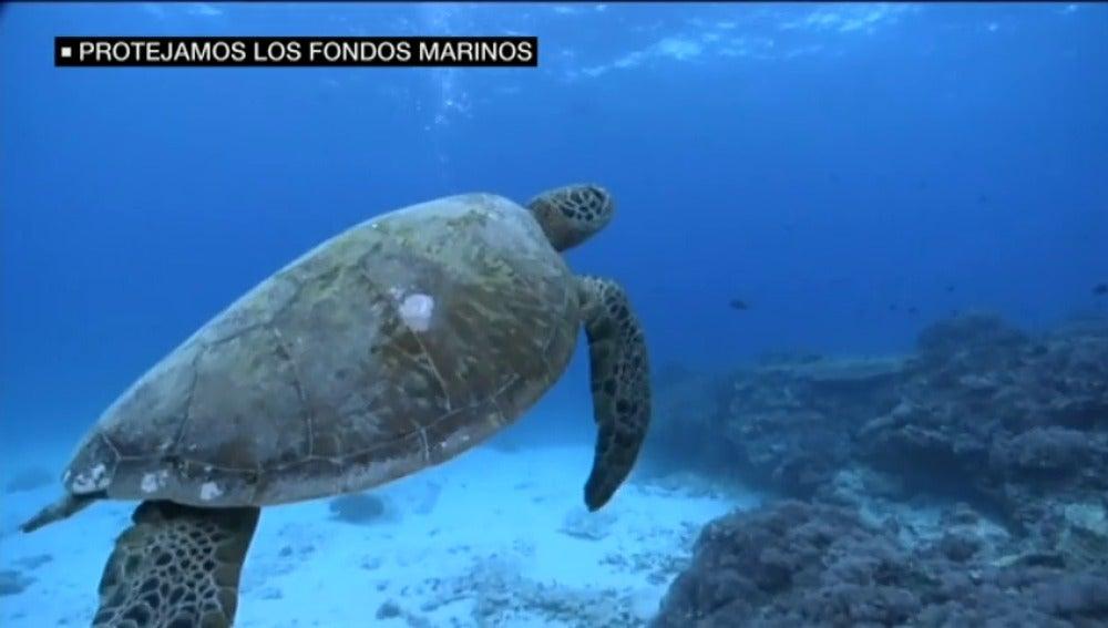 Frame 17.28 de: ¿Conoces los paraísos submarinos que tienen España? Las profundidades de los océanos, las grandes olvidadas