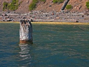 """El """"anciano"""" del lago del Cráter, en Oregón, flota en vertical."""