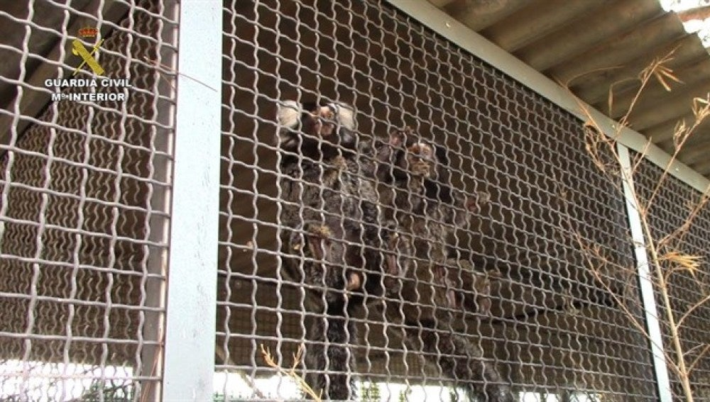 Animales incautados por la Guardia Civil
