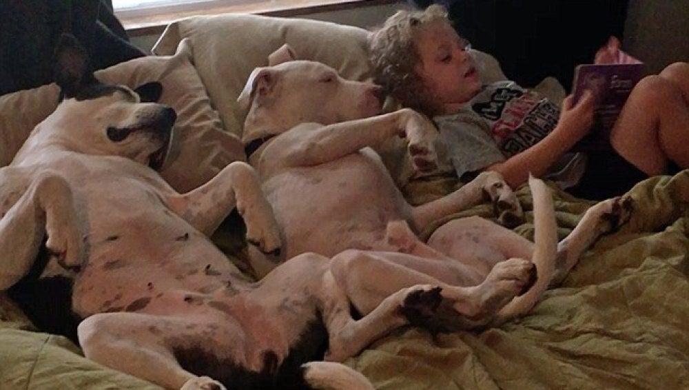 River lee a sus dos perros