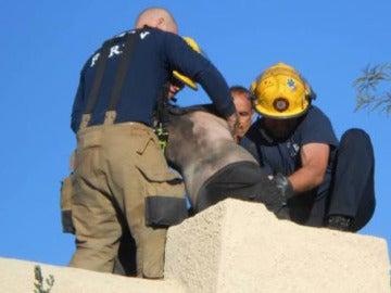 Un joven intenta acceder a su casa por la chimenea y queda atrapado